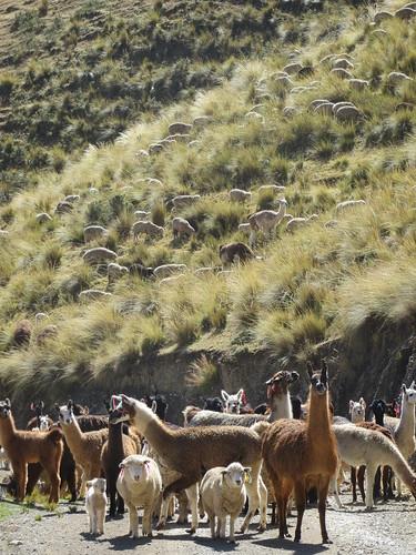 Peruvian traffic