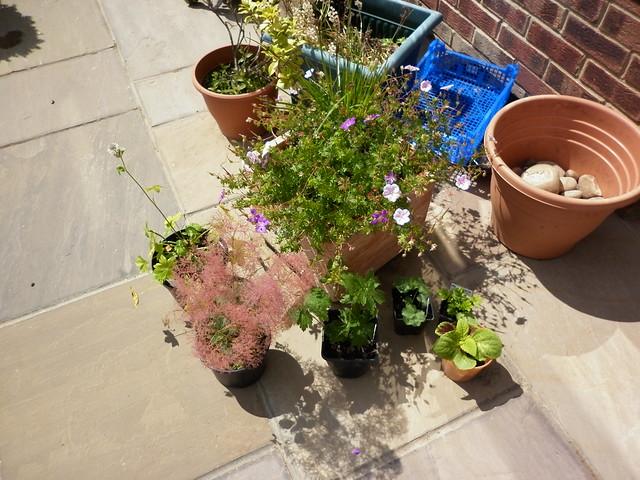 Left to plant!!