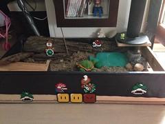 Schildkrötenterrarium + Super Mario World
