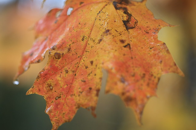 Fall Drops