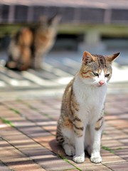 藍島の猫 20130513 #5