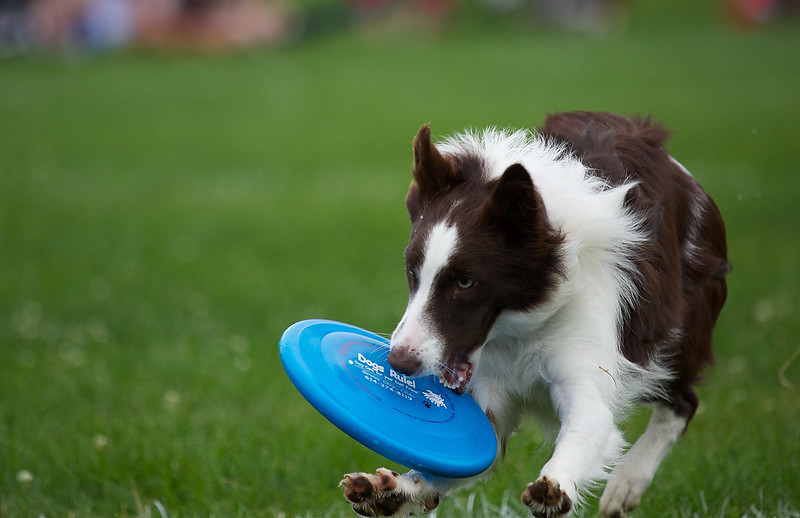 DublinSkyhoundz2013Web048