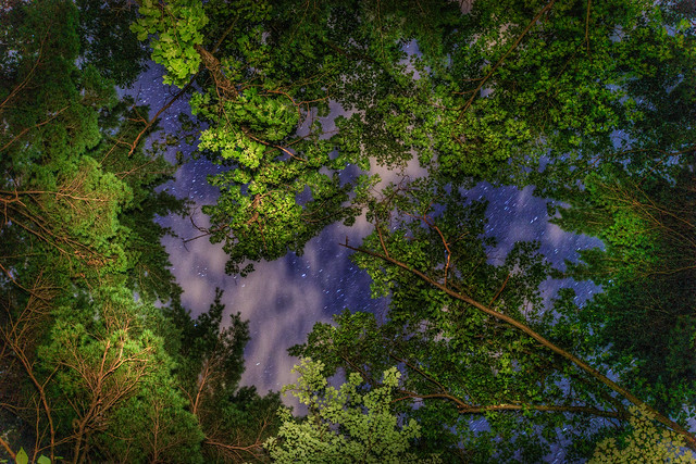 Trees, Stars, Sky - at Moreau Lake