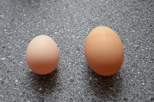eggs Sept 13