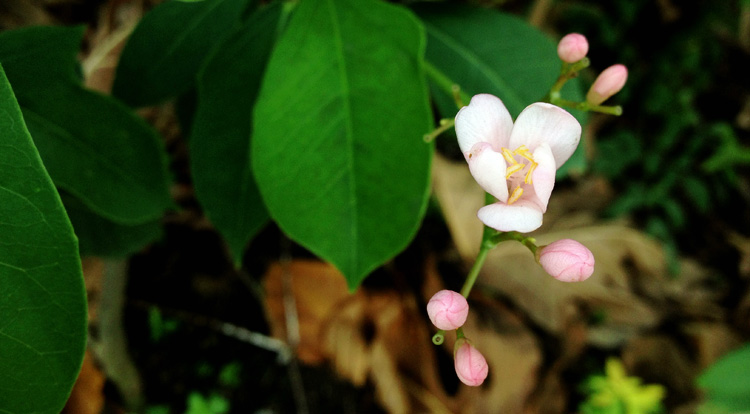 small-pink-flower2