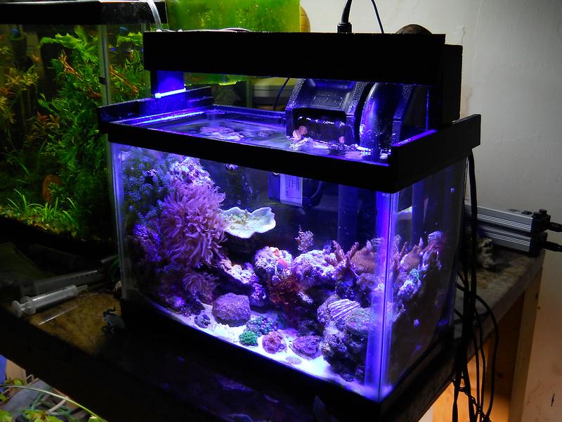 My First Saltwater Tank Kinda 2 5 Gal Reef