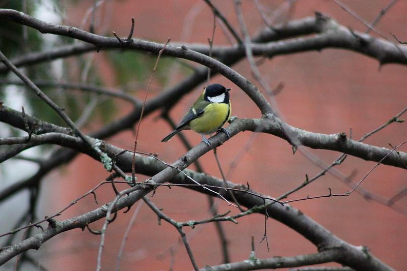 birds 048