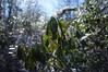 Frozen Mountain Laurel by sso
