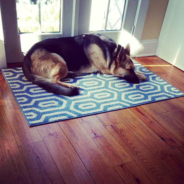 More #thanksgiving napping. #gsd
