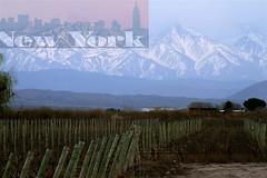 Vino argento en Nueva York