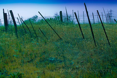 fence - green