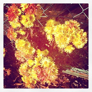 #street  #flowers