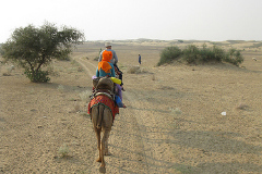 pushkar camel safari