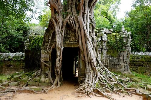 Entrance with tree: Ta Som