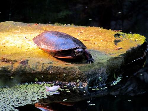 123 Turtles Biodome Montreal Canada 3221