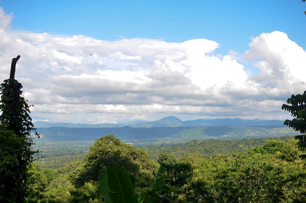 13. La selva infinita. Autor, Mixedeyes