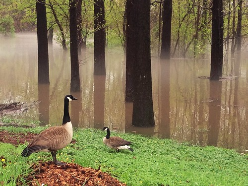 park mist tree bird water animal fog river geese newjersey spring flood rahway rahwayriverpark