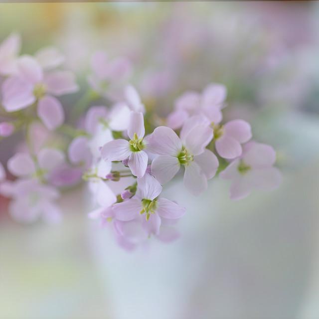 WEED IN MY KITCHEN WINDOW