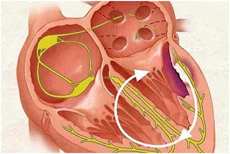 Bảo vệ sức khỏe trái tim để sống lâu hơn
