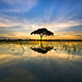 Reflection of lonely tree during sunset on paddy field at Parit 2 Timur, Sungai Besar, Selangor. by Azihan Yusoff