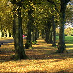Autumn in Haslam Park Preston