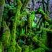 Kingdom of Moss by john&mairi
