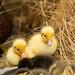 New Babys by abdula-almesleh