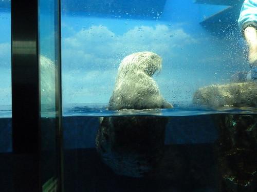 ラッコ・フィーディングタイム@サンシャイン水族館