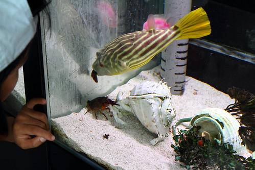 餵魚吃螯蝦