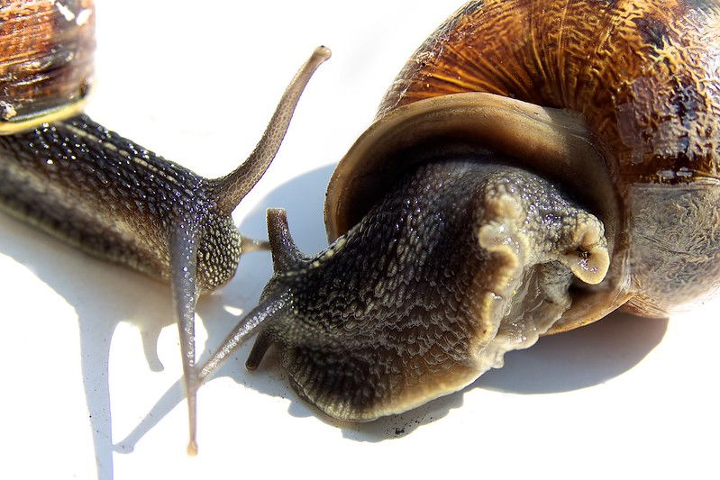 Snails on White 1