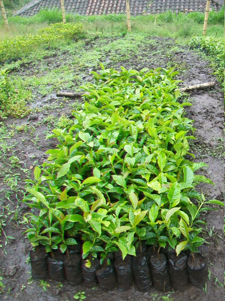 Uni n temporal consac yacuanquer trabajando en los for Importancia economica ecologica y ambiental de los viveros forestales