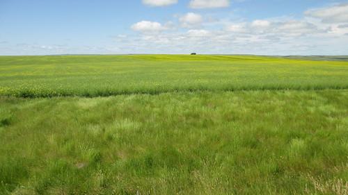 canada landscapes sk saskatchewan prairieprovinces lacpelletierruralmunicipality ruralmunicipalitynumber107