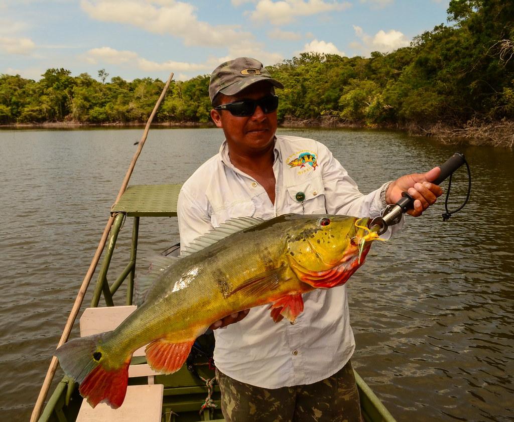 Agua boa amazon lodge peacock bass fly fishing for Bass fly fishing