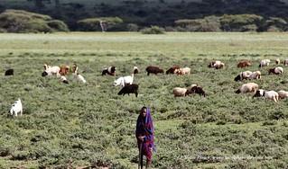 Goat Herder Boy - Lonely in Kenya