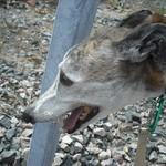 04-25-10 Deer Island