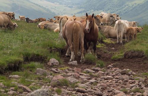 A multicultural herd