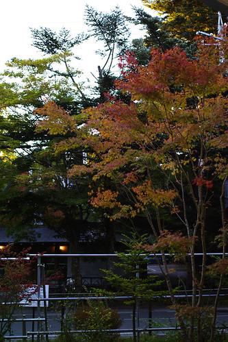 紅葉の始まり by leicadaisuki