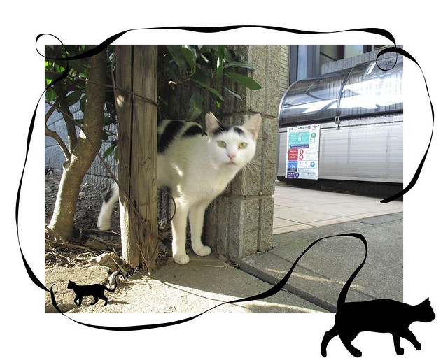 『catzElysium〜石屋の猫5』の画像
