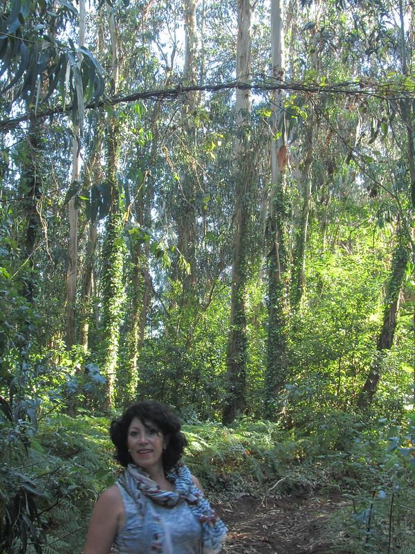 Beatriz muy guapa en el bosque de eucaliptos