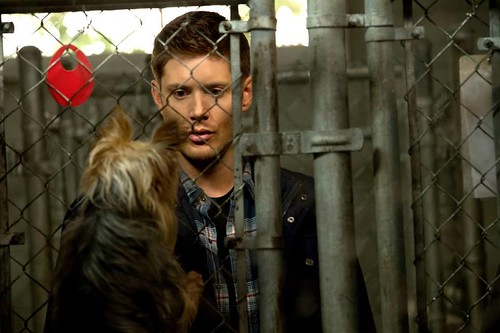 Recap/review of Supernatural 9x04 'Dog Dean Afternoon' by freshfromthe.com