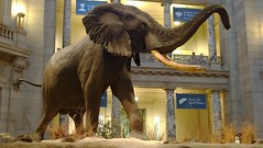 temple(0.0), zoo(0.0), mammoth(0.0), monument(0.0), art(1.0), elephant(1.0), elephants and mammoths(1.0), sculpture(1.0), statue(1.0),