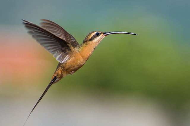 Beautiful Birds - Magazine cover