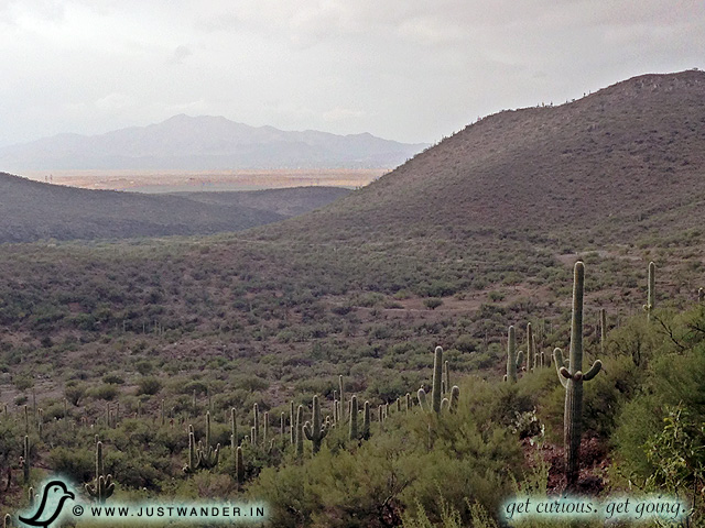 PIC: Rolling hills of fog and cats here at Colossal Cave Mountain Park.