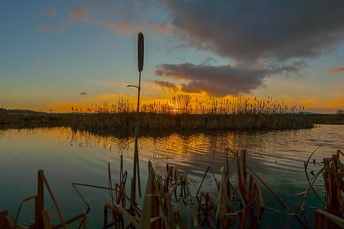 sunset silhouette reeds exeter exetercanal mygearandme mygearandmepremium mygearandmebronze mygearandmesilver mygearandmegold mygearandmeplatinum mygearandmediamond nalamanpics