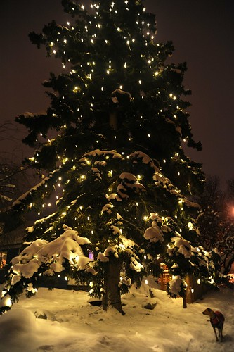 Rosie under a huge lit and glowing Christmas tree, snow all around, South Addition, Anchorage, Alaska by Wonderlane