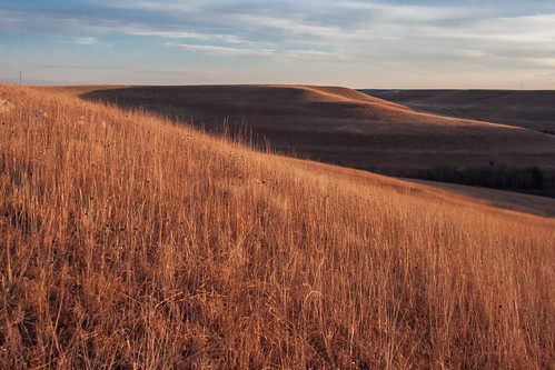 winter grass dawn buffalo ks hills kansas prairie plains flint graze flinthills konzaprairie konza bluestem
