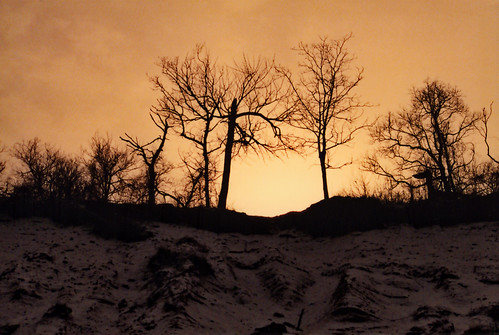 trees winter ny beach silhouette sand huntington longisland caumsett lloydneck marshallfieldestate