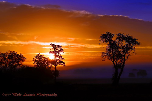 sunset orange tree fog sunrise glow mikelennett