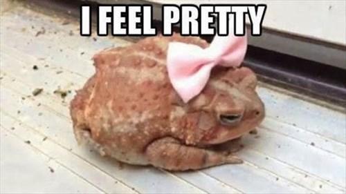 Pretty-toad