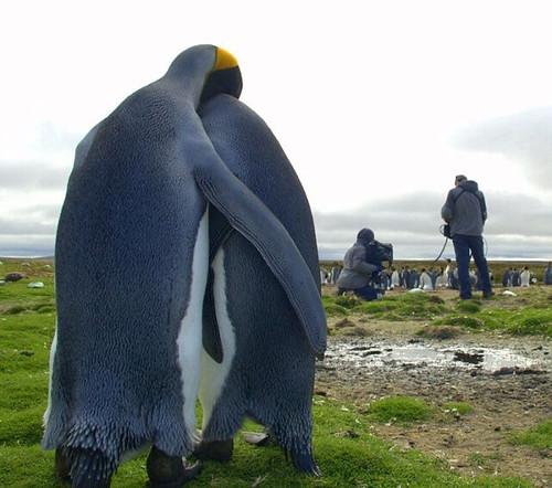 あまりにリア充過ぎて悔しくなるペンギンが話題に| : ^^ : 秒刊SUNDAY